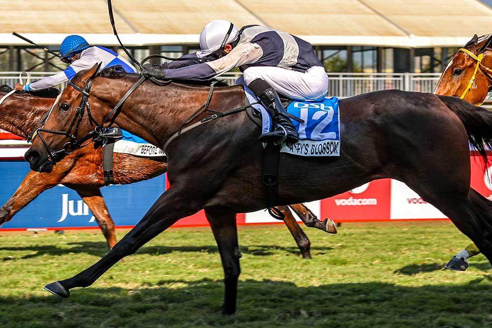 dynasty's blossom horse