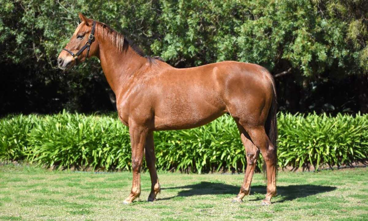 freedom charter broodmare