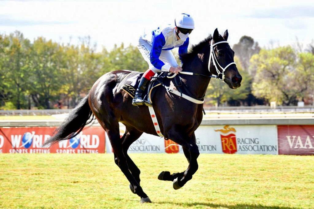 redoutes choice stallion